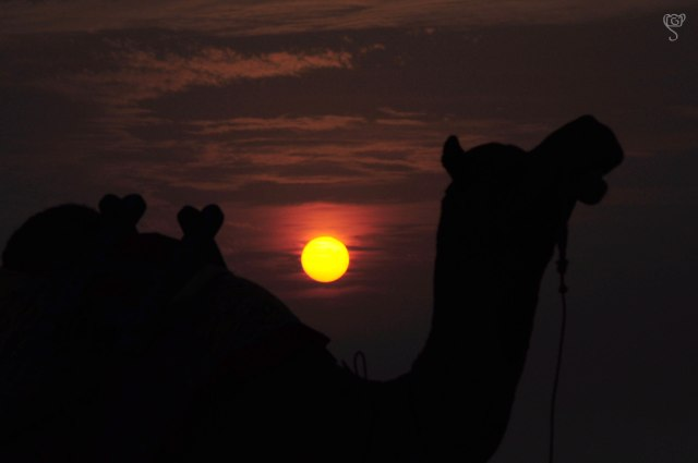 Silhouette of Camel during Sunset at White Rann
