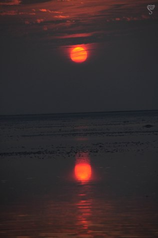Sunset at the Salty Marsh of White Rann