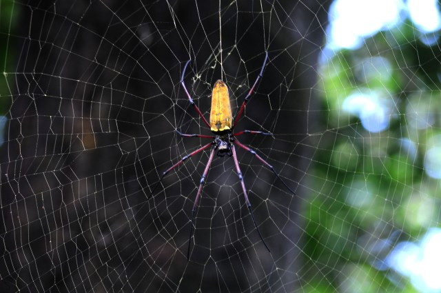 Huge Spider in its Web