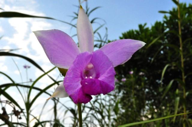 Flowers in Bhalukpong Orchidarium