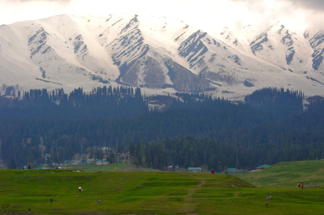 Meadows in Gulmarg