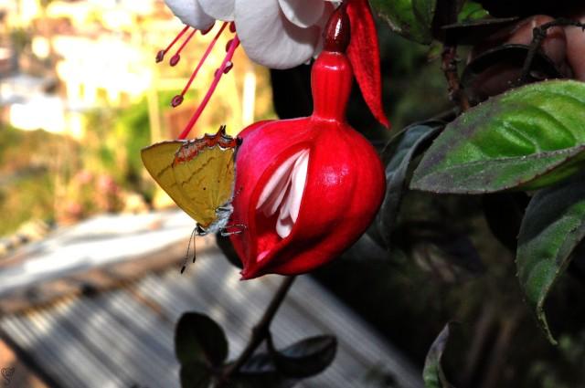 Bhalukpong Orchidarium