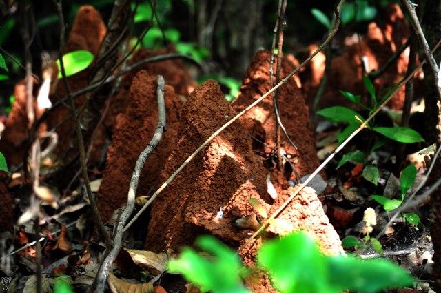 The termite's nest