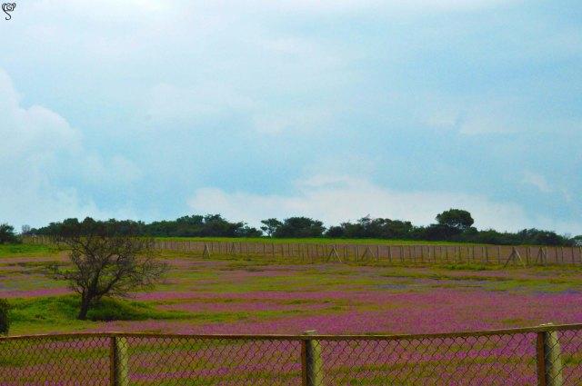 Fenced hues