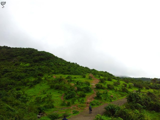The hiking track