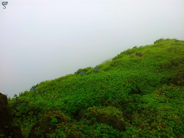The mist covered gorge from the top of the fort