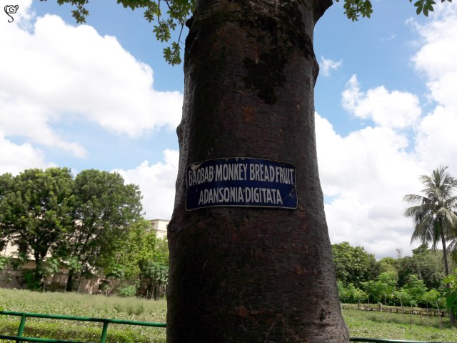 The label on the tree