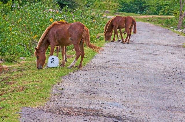 Horses on the way to Daroji Sanctuary