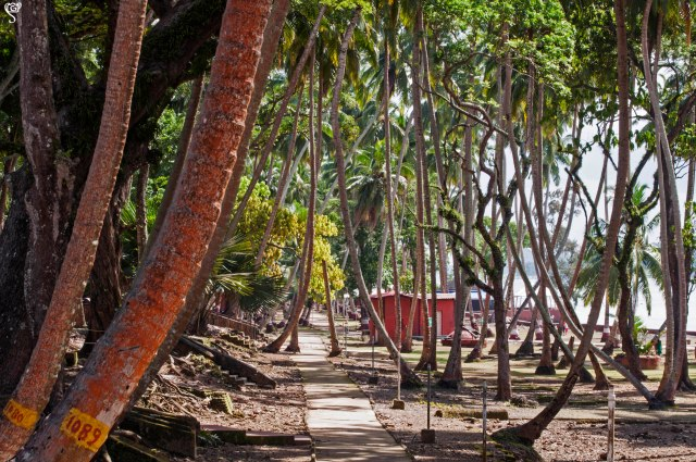 The coconut grove