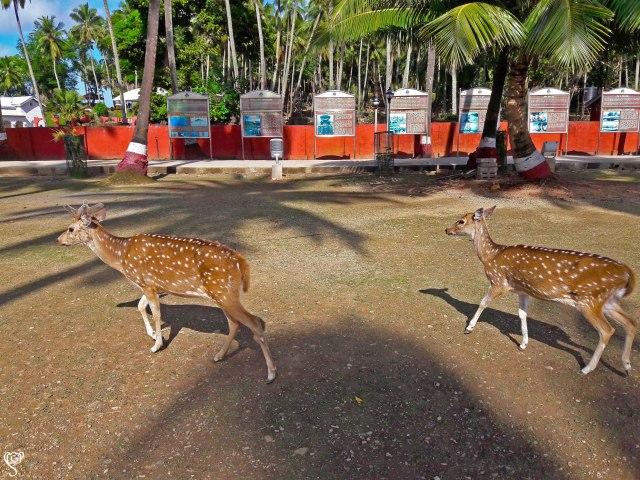 The free roaming deer