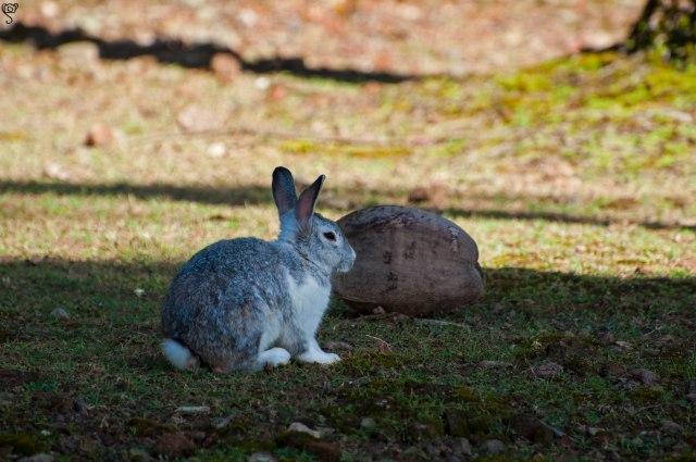 The furry Bunny