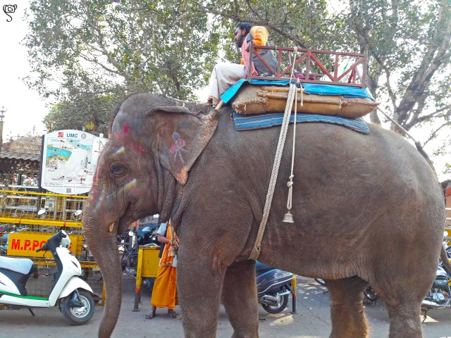The priest like Mahout on the elephant