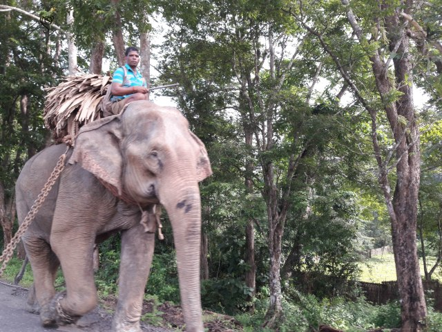 The forest employee elephant