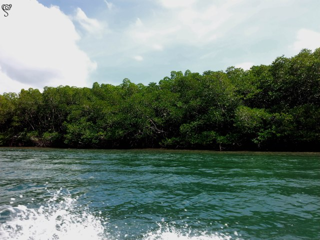 Mangrove forest all around