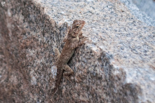 Lizzard in camouflage around the area