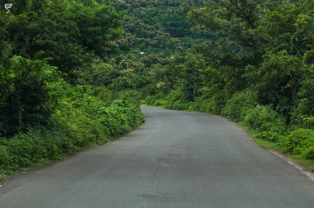 The curvy roads to Bhimashankar
