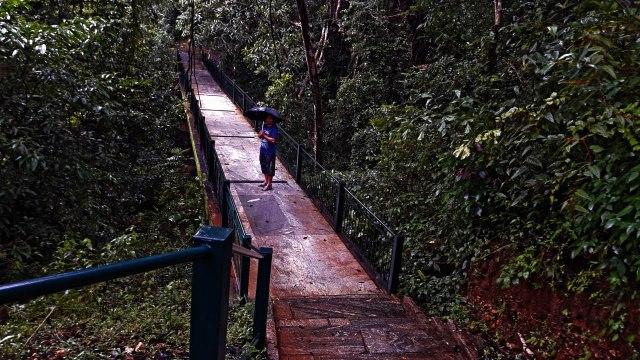The bridge through the forest
