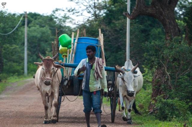 Village life - Man bringing water for the village