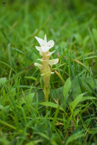 Here is another flower within the grass