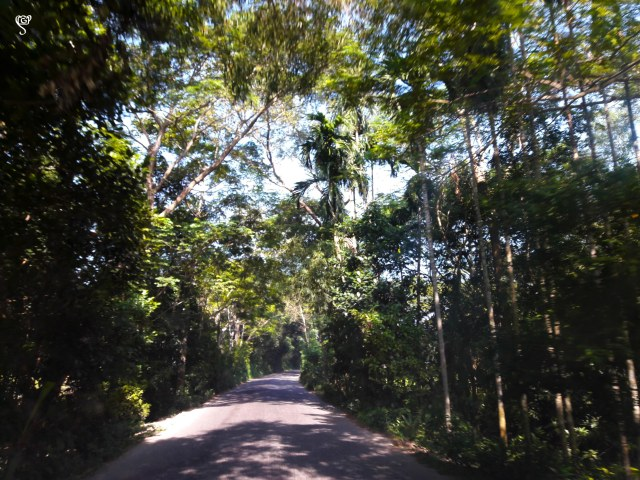 The road towards Banaripara