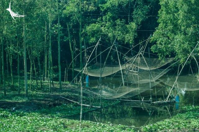 Fishing nets in Comilla tanks