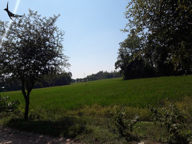 Paddy fields on the way