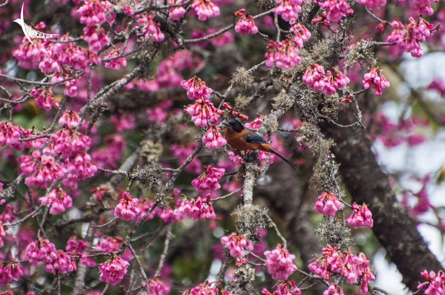 I could not identify the bird nor the flower