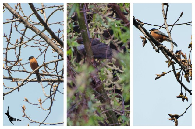 Identification required... First and the third seems to be the same bird