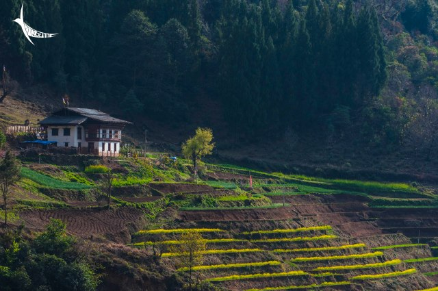 The beautiful view of the terraced cultivation with the farmhouse from the village restaurant
