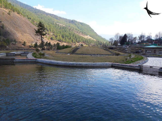 Ponds of the fisheries department