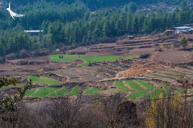 The green valley near the Drukgyel Dzong