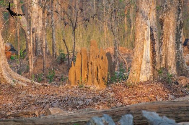 Termite fortress