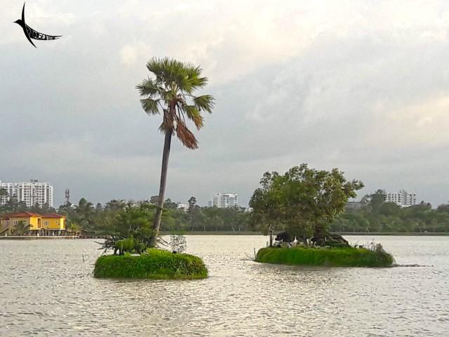 Tiny Islands on the lake