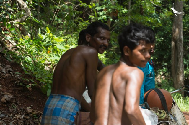Honey gatherers in search of beehives