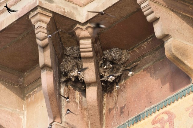 These old buildings are also the home for the Swallows