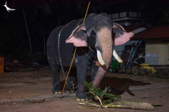 Photography is not allowed in the Elephant Stable so I captured this one within the temple premises