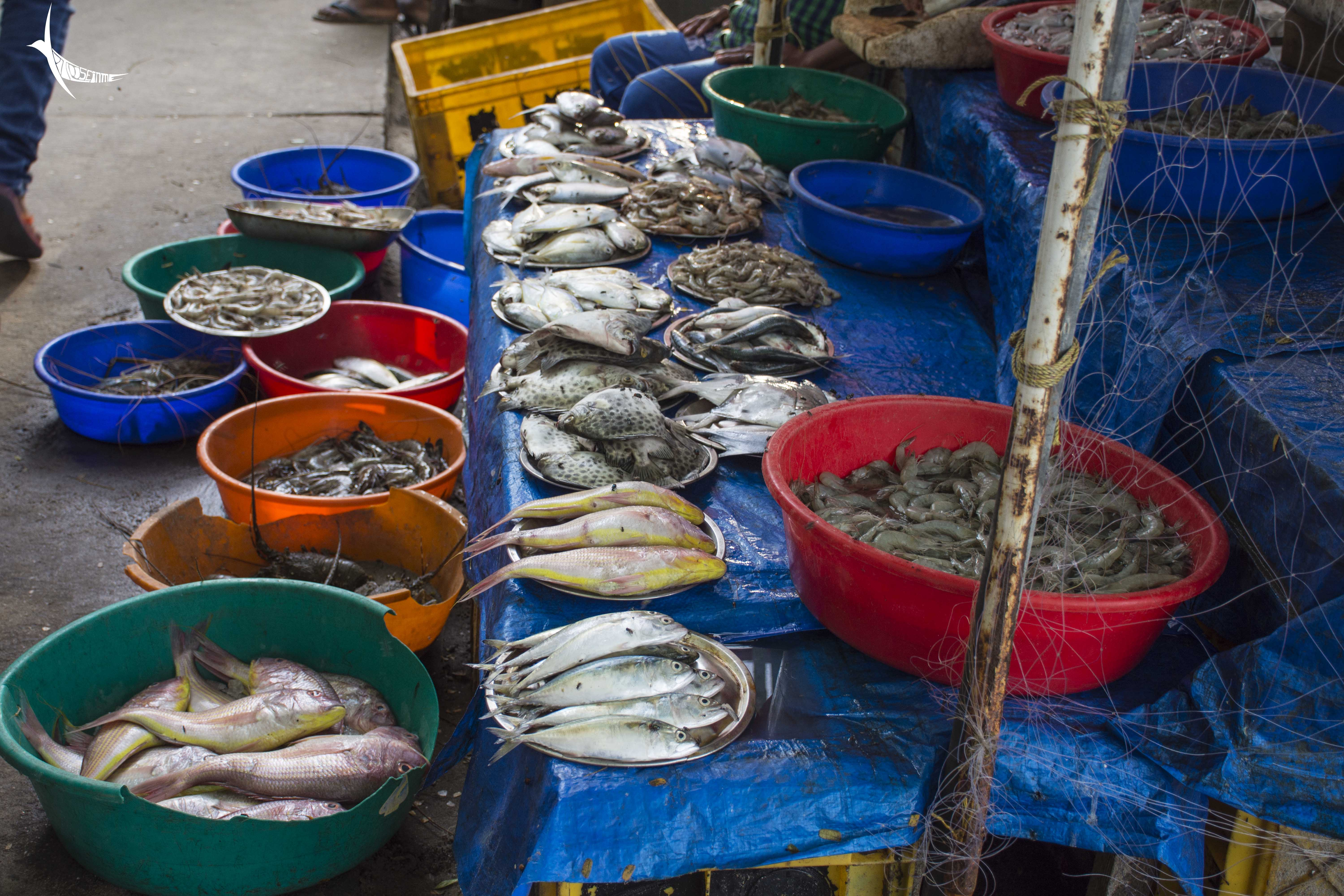 Selling the fresh catch