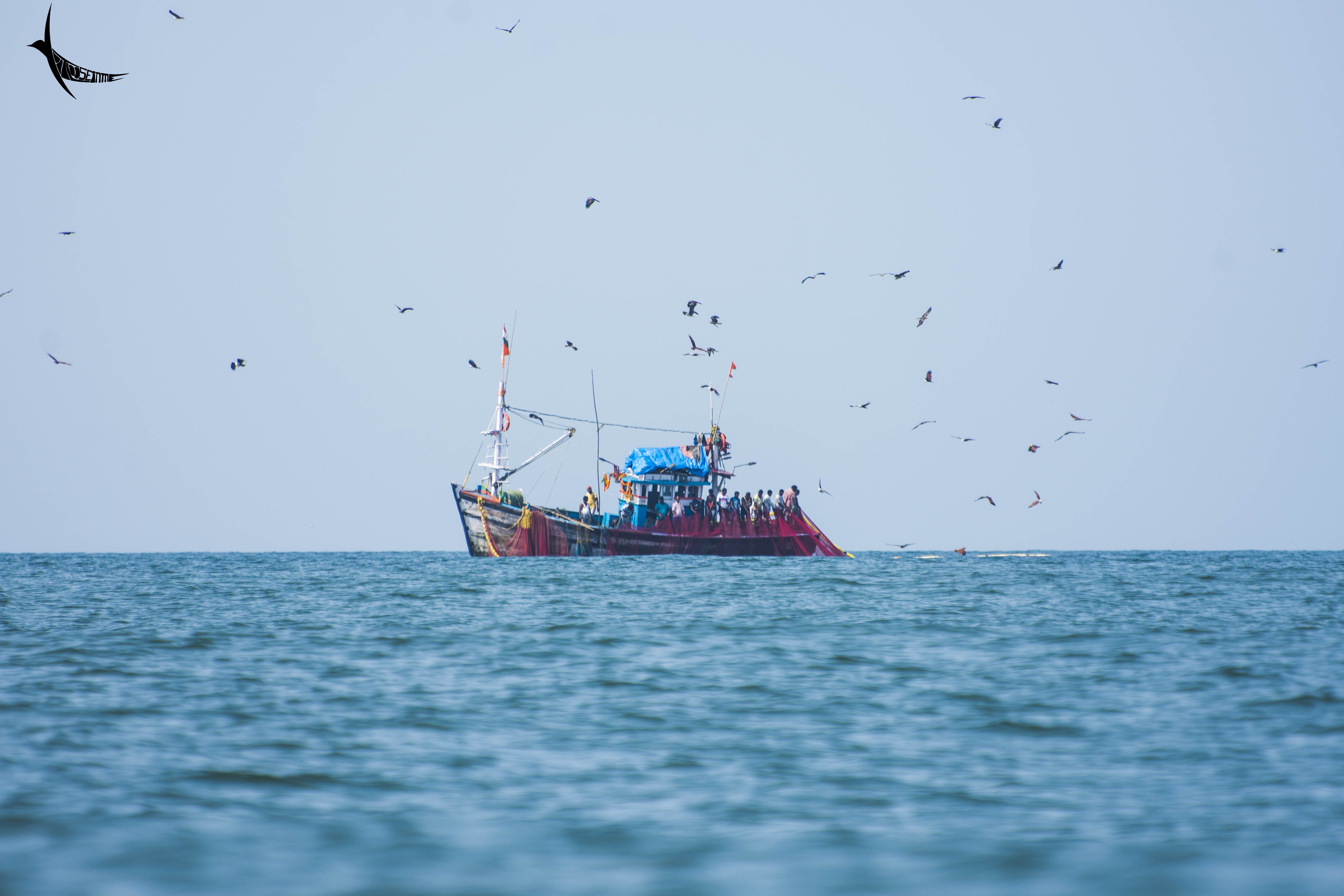 The fishing trawler surrounded by birds