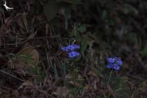 Pretty tiny flowers in the bush
