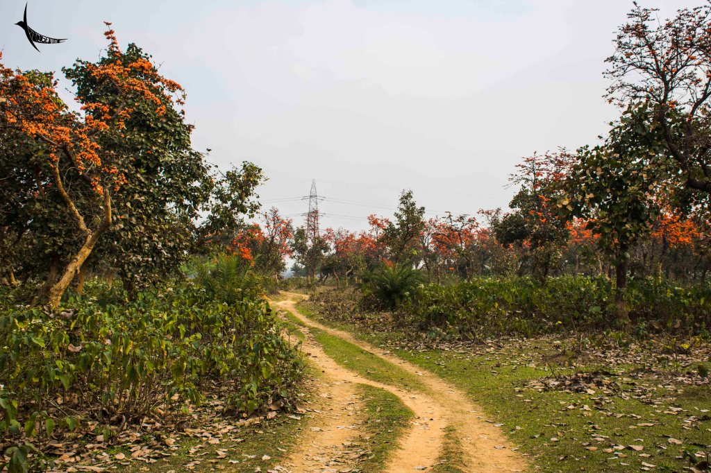 The road to Manpur village