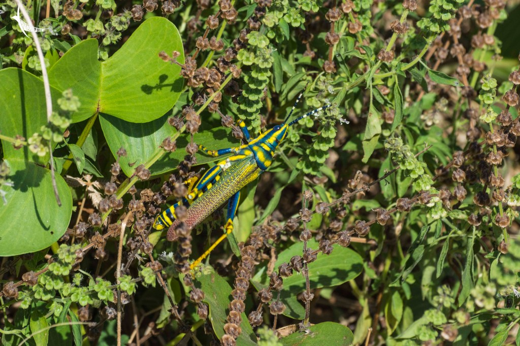 This colourful little creature was lurking around the bush