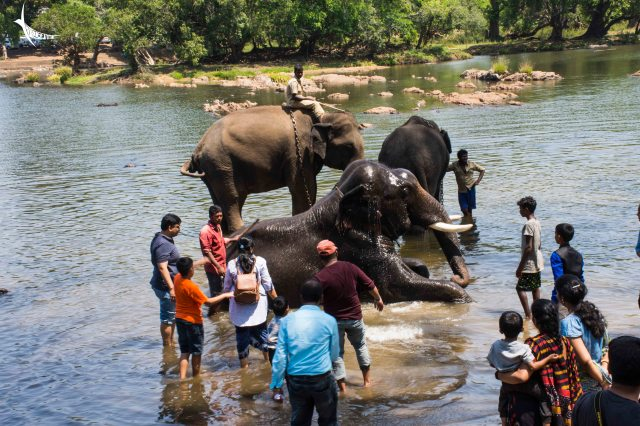 Elephants taking bath in the river