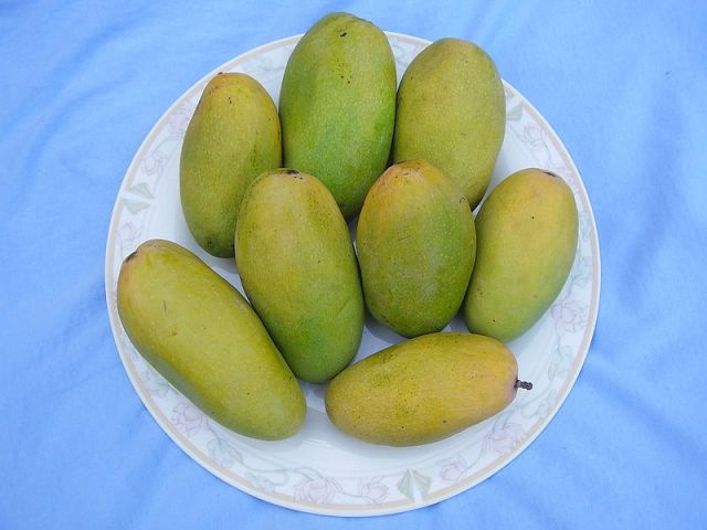 Dusseri Mango PC: Wikipedia
