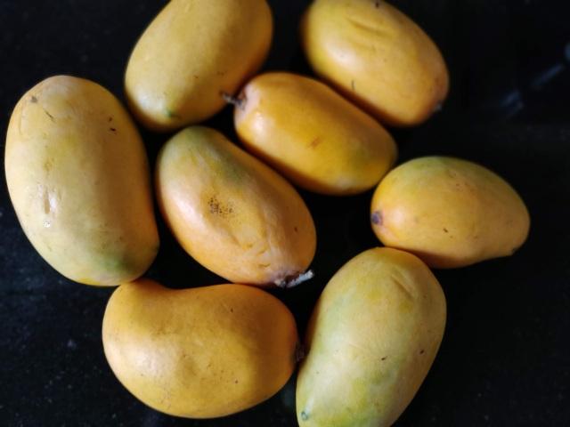 Mango of Kesar variety