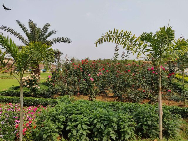 The beautiful garden of the Lalji temple adjoining the previous fort area