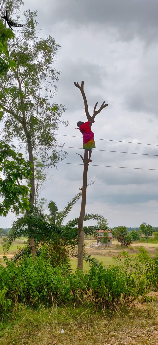 A tribal lady climbed up a dead tree, it was little surprising yet amusing to me
