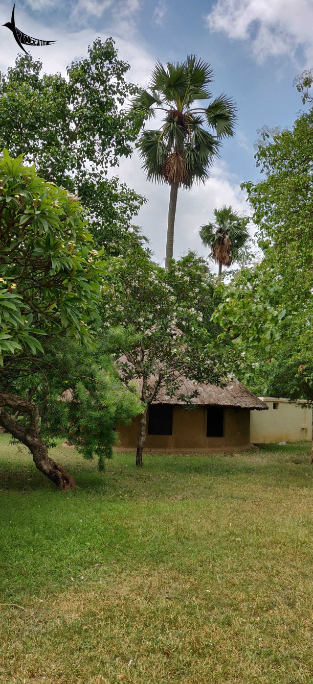 Taladhwaj - a round mud hut built around a tall toddy palm tree