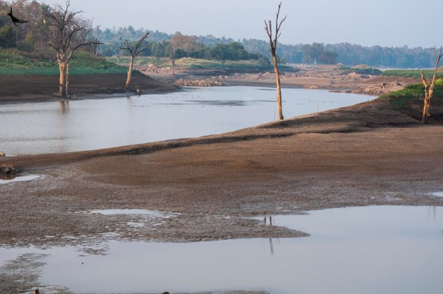 Pench River flowing through the Pench National Park