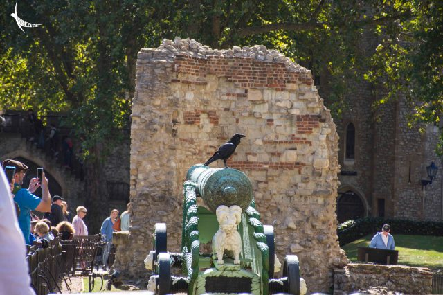 Though I did not miss the opportunity to see the Raven guarding the Tower