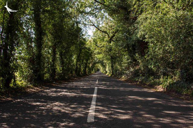 The road near Gracehill House